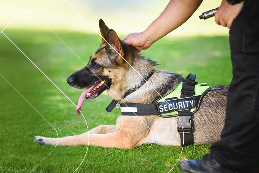 Expeditious Security Image Canine